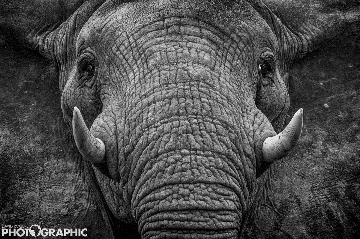 Elephant framed  | 9 of 10 prints available | from R4500