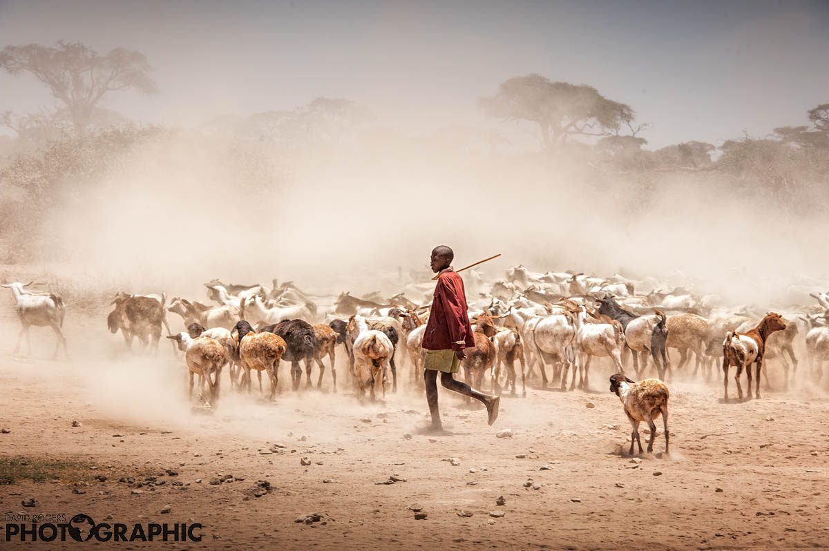 Maasai herder  | 9 of 10 prints available | from R4500