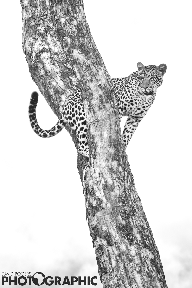 Poised | 10 of 10 prints available | from R3500