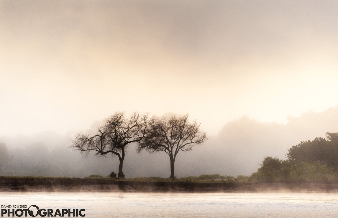 Luangwa symmetry  | 9 of 10 prints available | from R4500